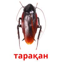 тарақан picture flashcards