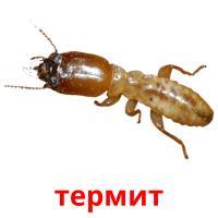 термит picture flashcards