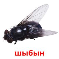 шыбын picture flashcards