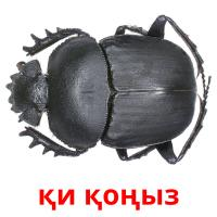 қи қоңыз picture flashcards