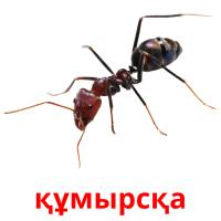 құмырсқа picture flashcards