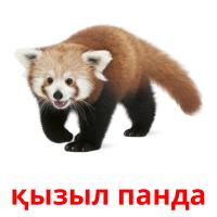қызыл панда picture flashcards