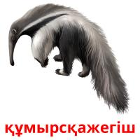 құмырсқажегіш picture flashcards