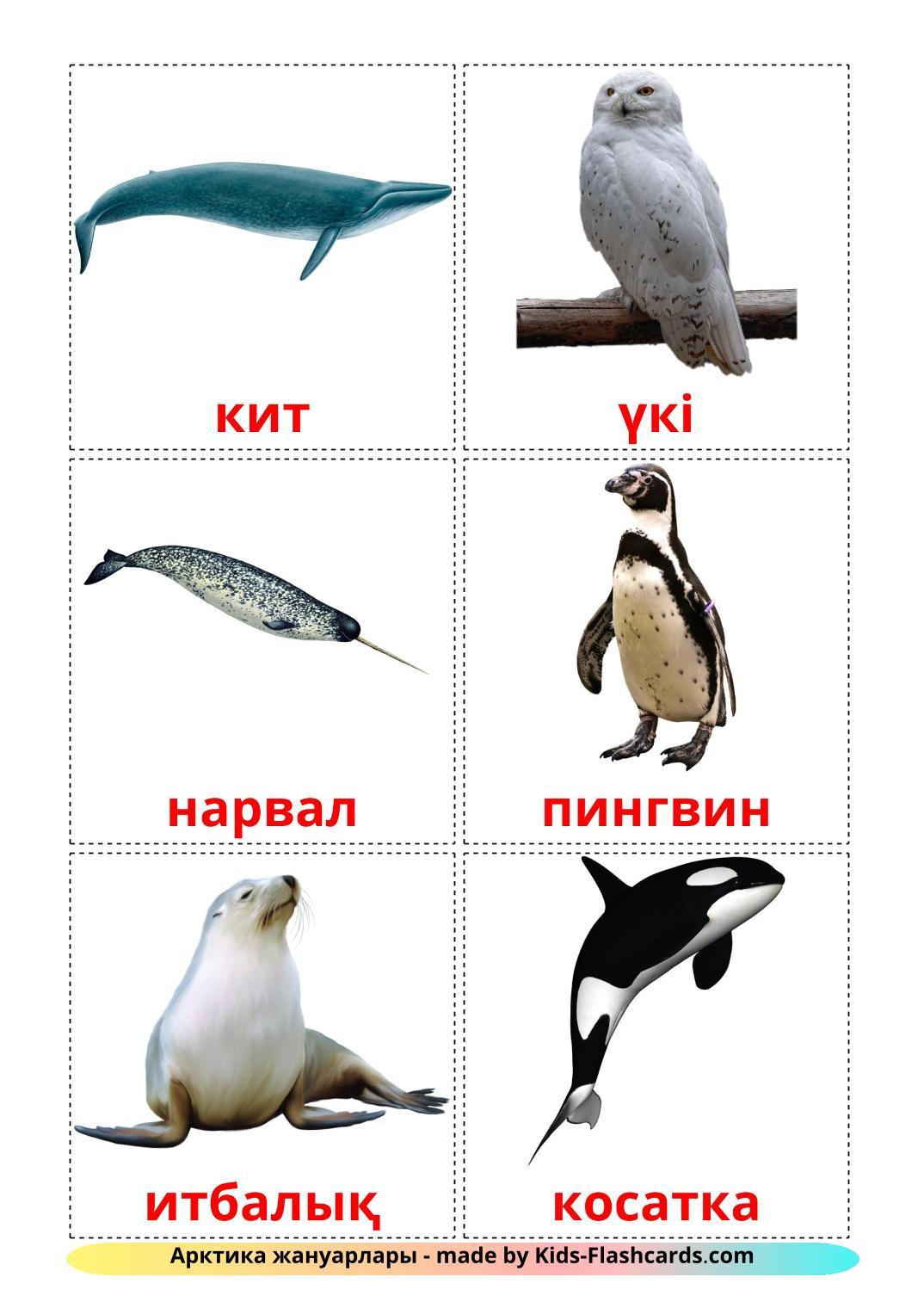 Arctic animals - 14 Free Printable kazakh Flashcards