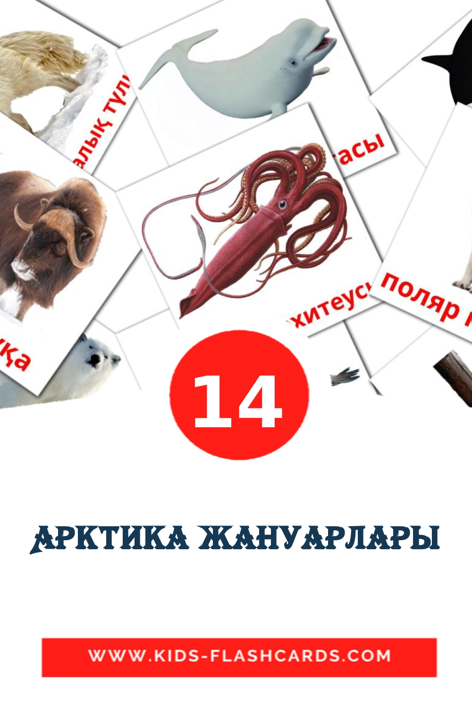 14 Арктика жануарлары Picture Cards for Kindergarden in kazakh