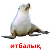итбалық picture flashcards