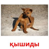 қышиды picture flashcards