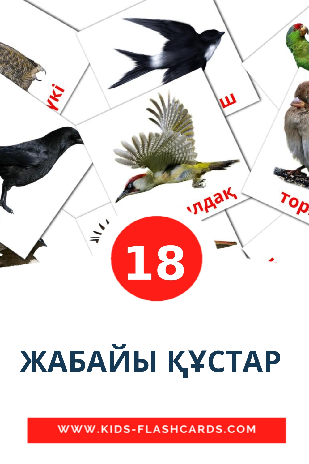 17 ЖАБАЙЫ ҚҰСТАР  Picture Cards for Kindergarden in kazakh