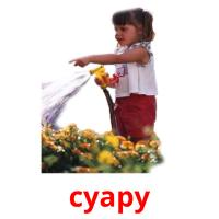 суару picture flashcards