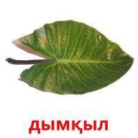 дымқыл picture flashcards