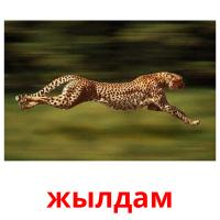 жылдам picture flashcards