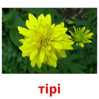 тірі picture flashcards