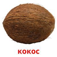 кокос карточки энциклопедических знаний