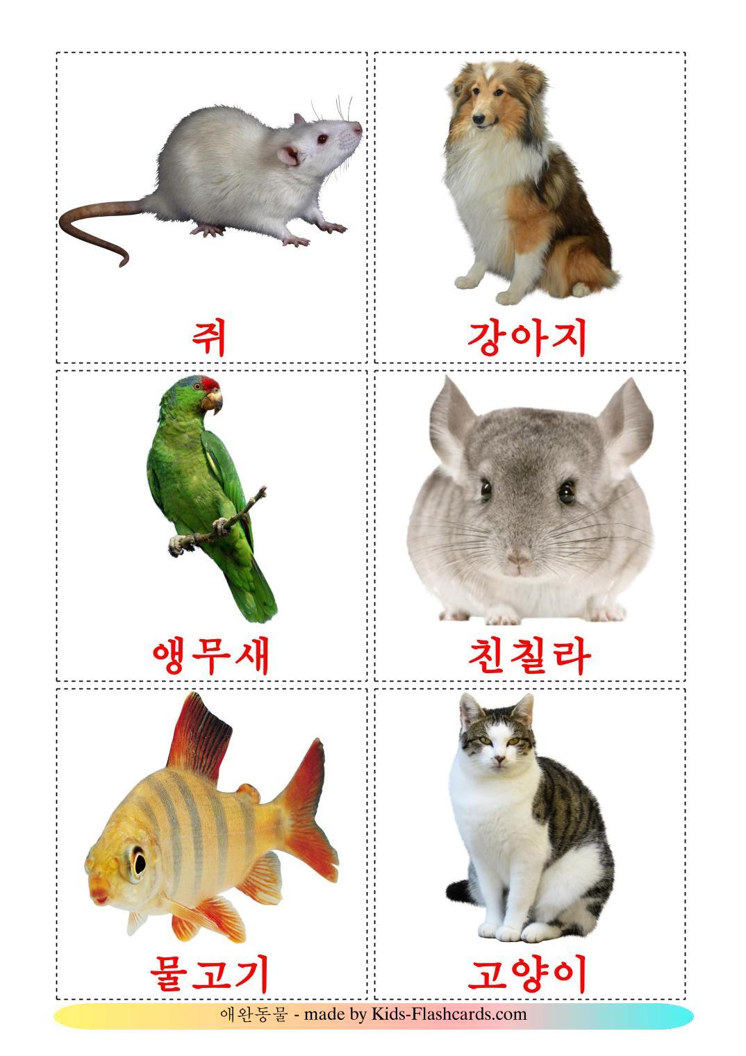 Домашние животные - 10 Карточек Домана на корейском