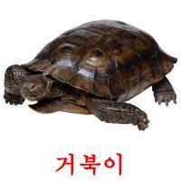 거북이 карточки энциклопедических знаний
