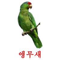 앵무새 карточки энциклопедических знаний
