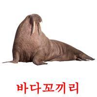 바다꼬끼리 picture flashcards