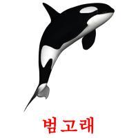 범고래 picture flashcards