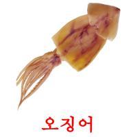 오징어 picture flashcards