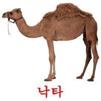 낙타 picture flashcards