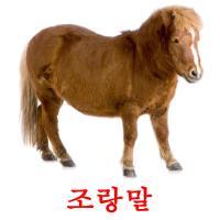 조랑말 picture flashcards