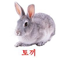 토끼 picture flashcards