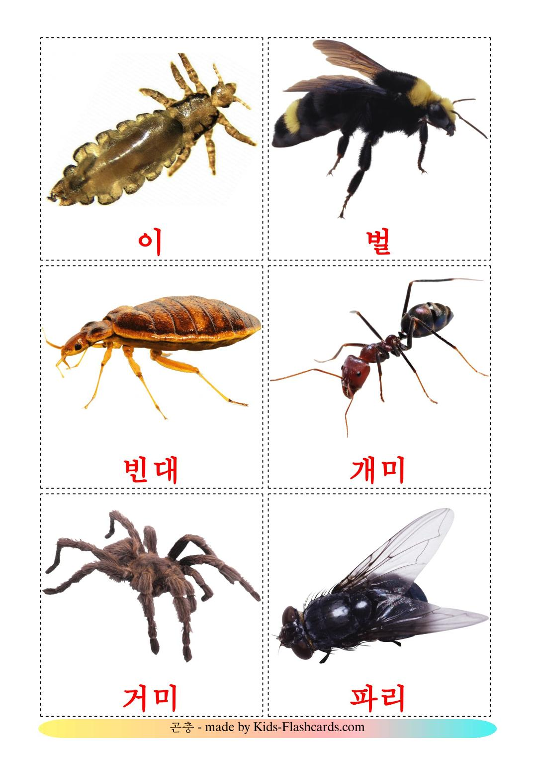 Insects - 23 Free Printable korean Flashcards