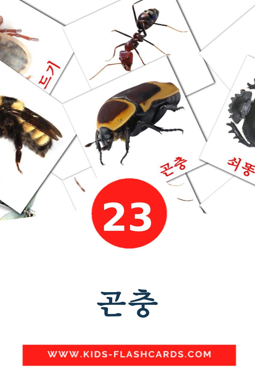 23 곤충 Picture Cards for Kindergarden in korean