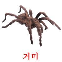 거미 picture flashcards