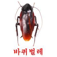 바퀴벌레 picture flashcards