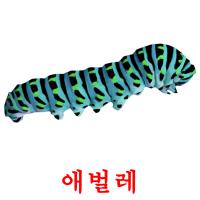 애벌레 picture flashcards