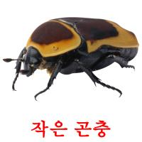 작은 곤충 picture flashcards