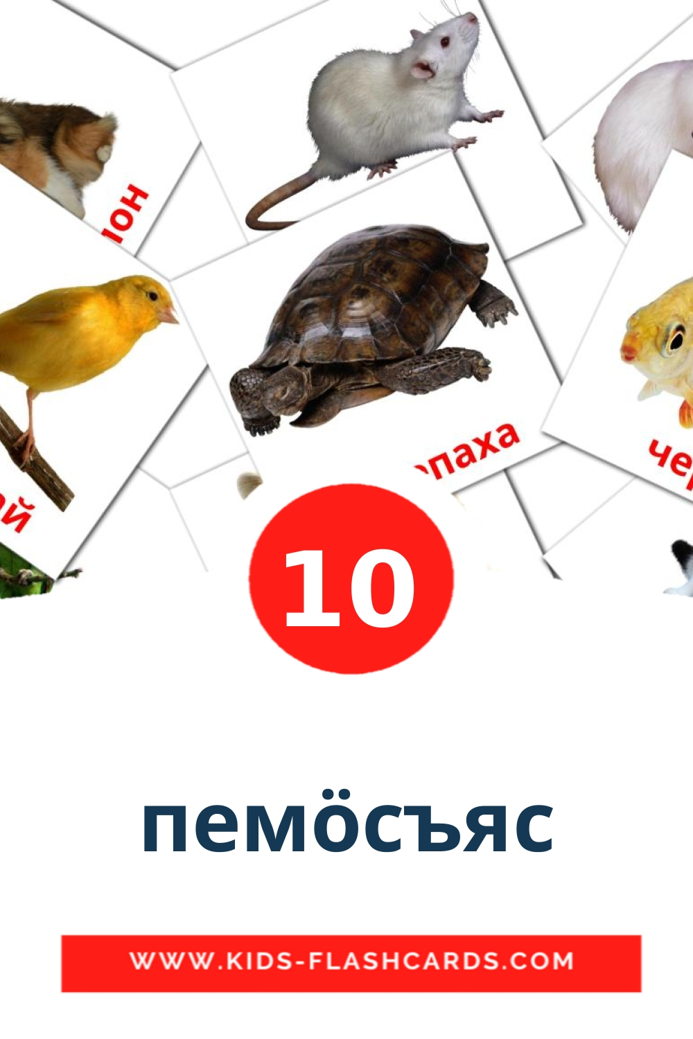 10 пемöcъяс Picture Cards for Kindergarden in komi