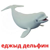еджыд дельфин picture flashcards