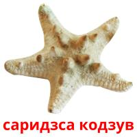 саридзса кодзув picture flashcards