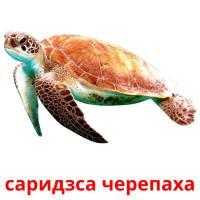 саридзса черепаха picture flashcards