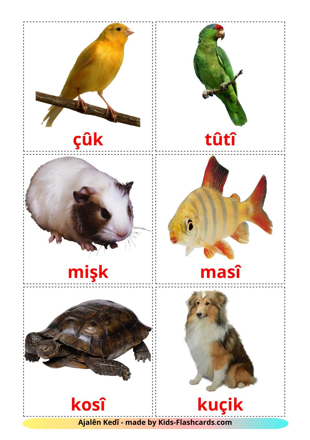 Domestic animals - 10 Free Printable kurmanj(Kurdish) Flashcards