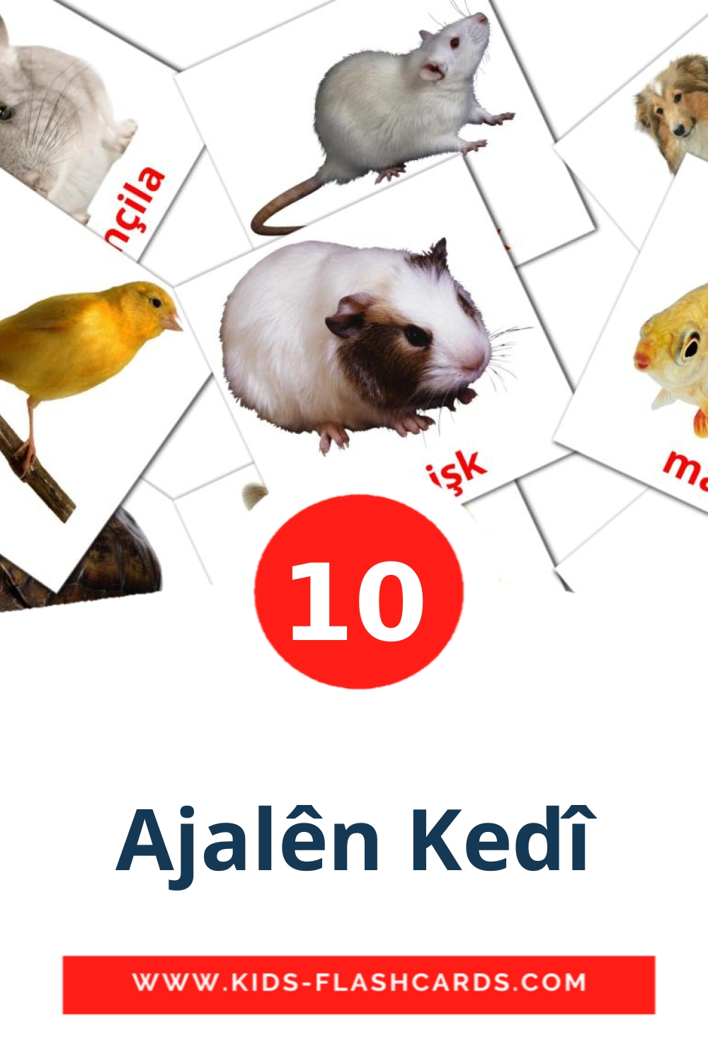 10 Ajalên Kedî Picture Cards for Kindergarden in kurmanj(Kurdish)