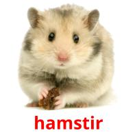 hamstir picture flashcards