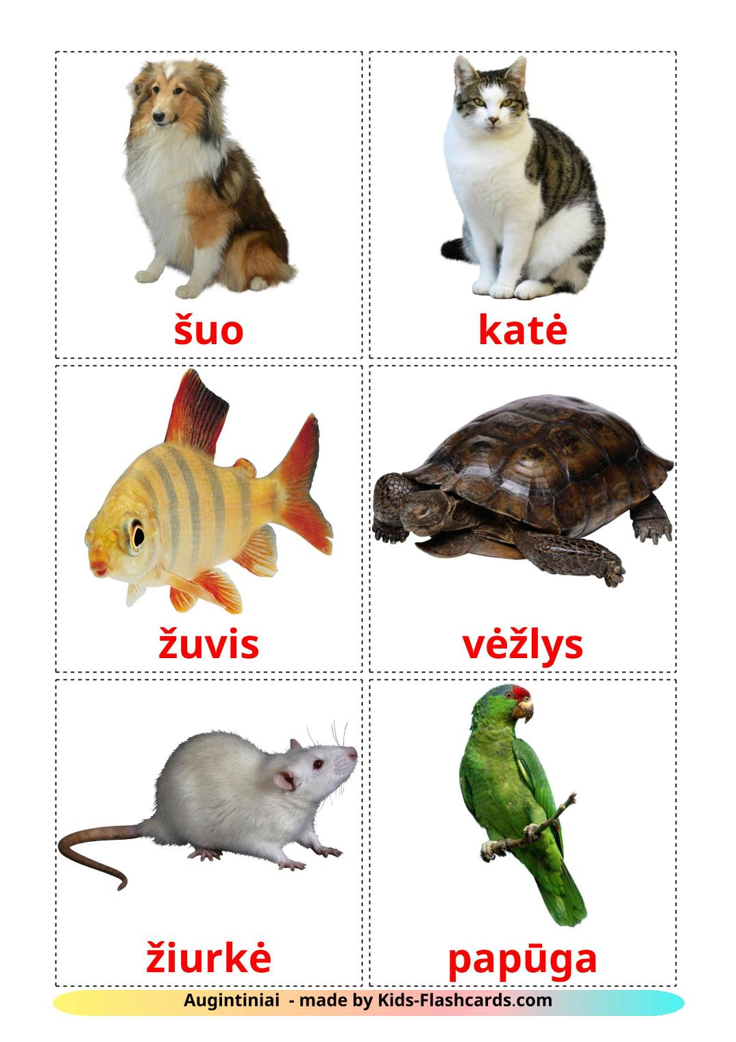 Domestic animals - 10 Free Printable lithuanian Flashcards