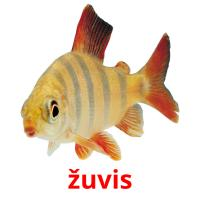 žuvis picture flashcards