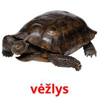 vėžlys picture flashcards