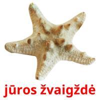 jūros žvaigždė picture flashcards