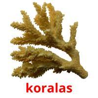 koralas picture flashcards