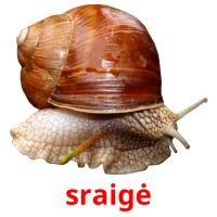sraigė picture flashcards