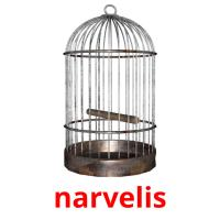 narvelis picture flashcards