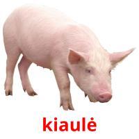 kiaulė picture flashcards