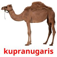 kupranugaris picture flashcards