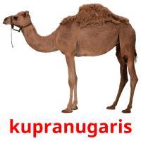 kupranugaris picture flashcards