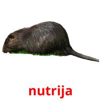 nutrija picture flashcards